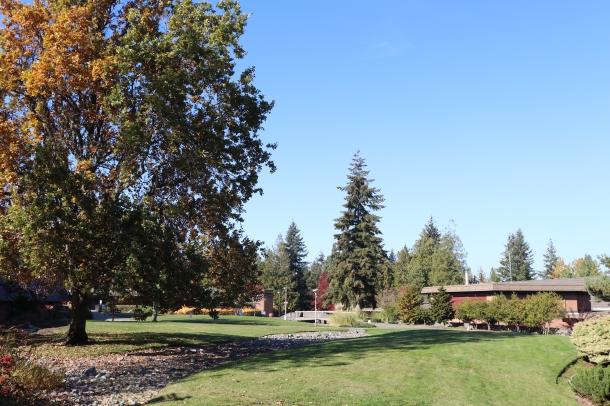 campus green tree